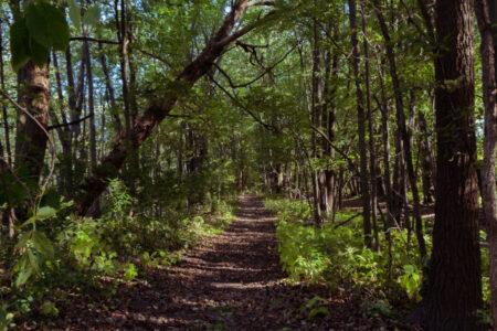 Zdjęcie przedstawia las